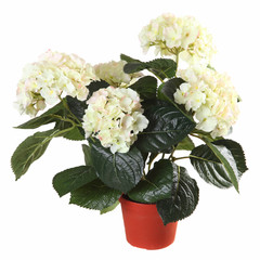 artificial hydrangea in a pot isolated on white background