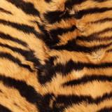 stripes on a tiger pelt poster