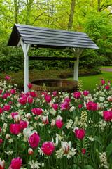 well in garden