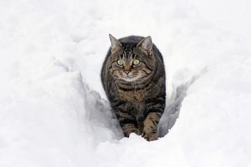 Einen Spaziergang durch den Schnee