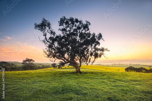 Fototapeten,agricultural,ackerbau,allein,australien