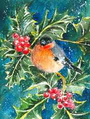 Bullfinch and holly watercolor painted.