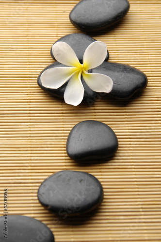 frangipani flower with spa stones on bamboo board