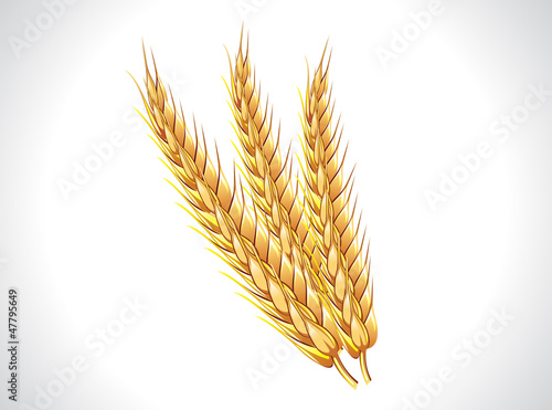 abstract wheat ears
