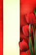Empty banner and red tulips on vintage background