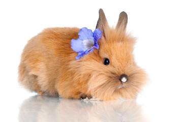 cute baby rabbit with a flower