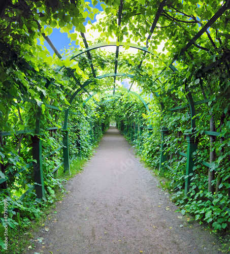 zielony-archway-w-ogrodzie-peterghof-st-peterburg