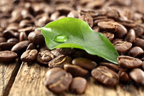 single leaf of coffee