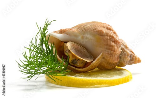 whelks with dill and lemon on a white background