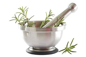 Romarin - Plante médicinale