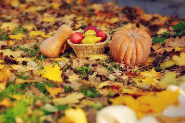 on the green grass is a fruit basket and a pumpkin