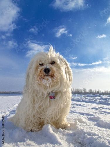 Hund im sonnigen Schneefall
