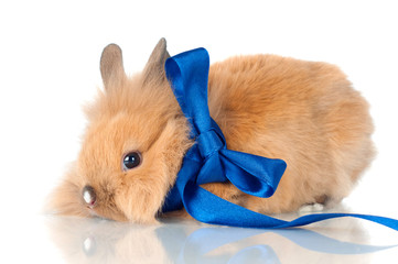 baby rabbit with a ribbon