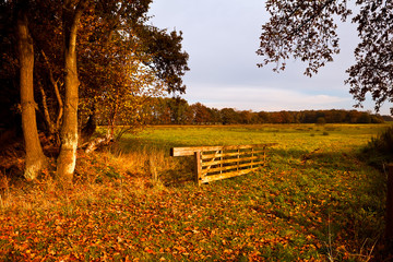 typical Dutch rural landscape