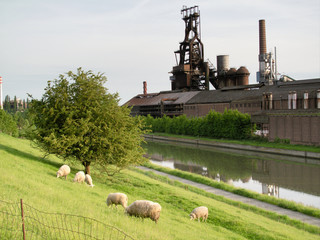 Foundry of Clabecq,near Tubize, and nice sheeps.
