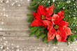 christmas tree branch with poinsettiaon wooden background