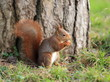 écureuil et sa noisette