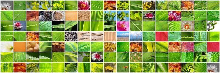 MULTICOLLAGE EN HORIZONTAL.DIFERENTES TEXTURAS NATURALES,PLANTAS