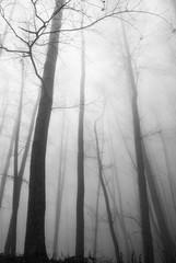 nebbia tra gli alberi in montagna