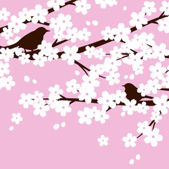 birds and cherry blossoms