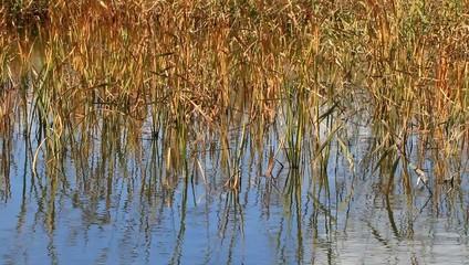 響灘ビオトープの湿地