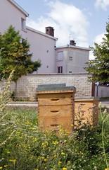 ruches en ville, au milieu des fleurs