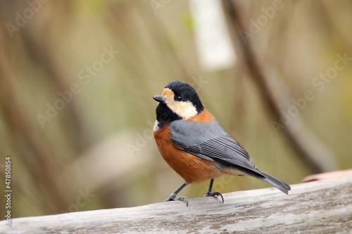 Fototapeten,vögel,braun,welt,vögel