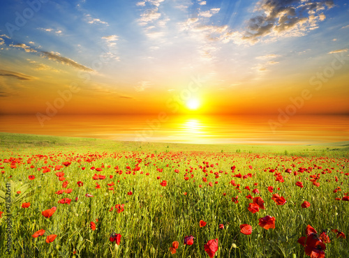 poppies against the sunset sky