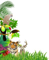 Wild animal in the jungle background