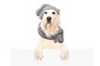 Dog retriever with hat and scarf behind blank panel