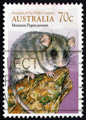 Postage stamp Australia 1990 Common Brushtail Possum