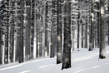 Winter forest scene