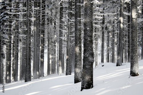 canvas print picture Winter forest scene