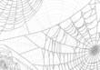 grey spider web background
