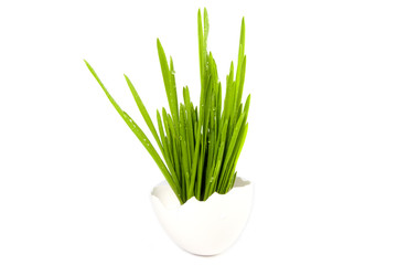 Easter shell egg and growing grass on white background concept