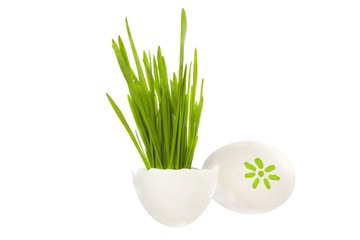 Easter eggs and growing green grass on white background concept