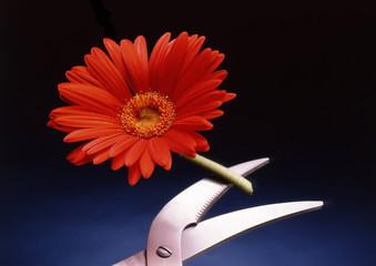 Flor cortada