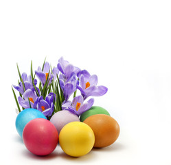 Easter colorful eggs and crocus isolated unique concept