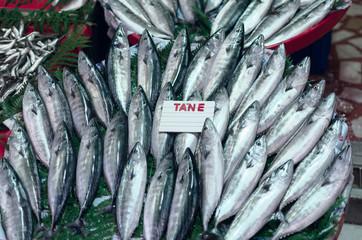 Fresh seafood trading in Turkey