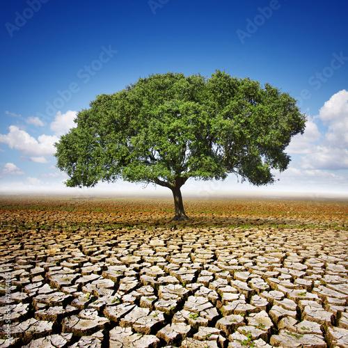 Tree On Dry Land - 47874835