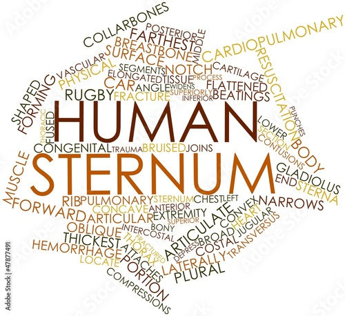 Word cloud for Human sternum