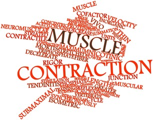 Word cloud for Muscle contraction