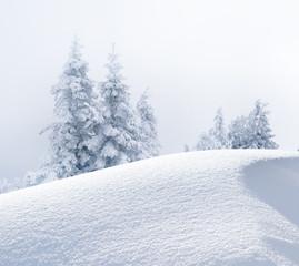 Verschneite Tannenbäume