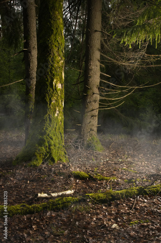 Fog in a wood