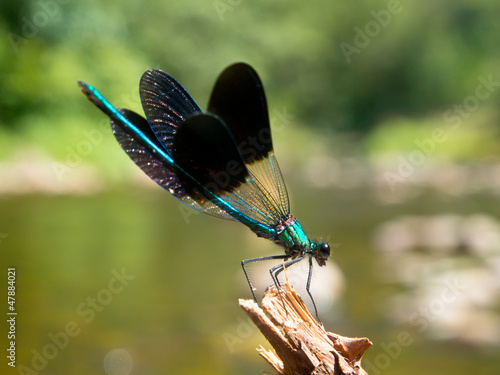 Damselfly on a twig