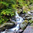 Fototapeten,wasserfall,neuseeland,regenwald,frühling