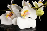 Fototapety beautiful white orchid, on black background