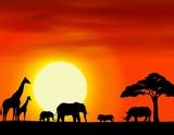 Africa safari landscape background - 47887087