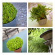 Plante, pot, jardin, jardinage, terrasse, vert, plantation