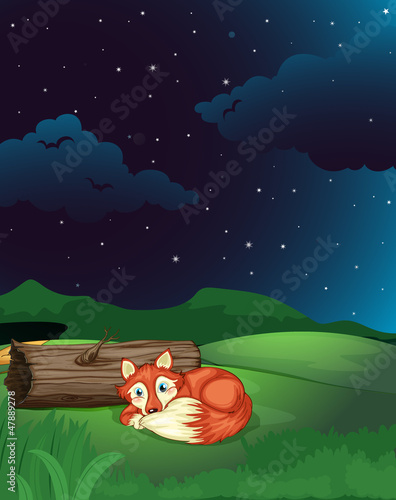 A fox lies next to wood in night